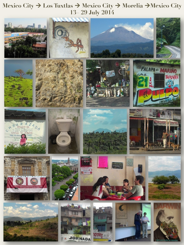 collage of on-the-road travel pix Mexico July 2014 reduced